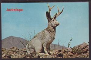 Jackalope Postcard