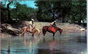 SW TEXAS HILL COUNTRY, TX    TEXAS RANGERS on Quarter Horses  c1950s    Postcard