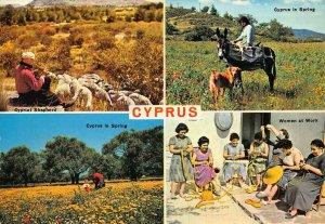 Cyprus in Spring ,Shepherd ,women at work postcard