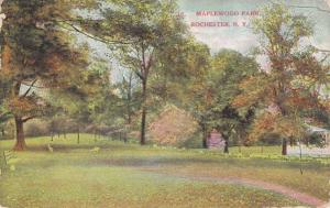 View in Maplewood Park, Rochester, New York - pm 1909 - DB