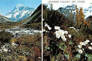 New Zealand Hooker Valley Mount Cook Flowers