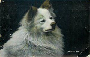 Postcard animals dog pupies