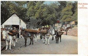 LP69  Pack Mules in California Postcard