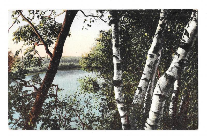 Taunton River MA Birch Trees Below the Weir Vintage Robbins Bros Postcard
