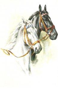 Heads of horses Nice modern Belgium postcard. continental size