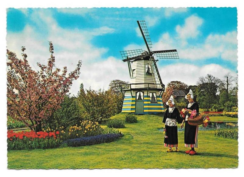 Netherlands Holland Flowers Windmills Tulips Postcard 4X6