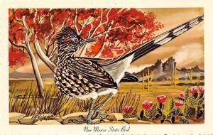 New Mexico~State Bird~Roadrunner~Flowering Cactus~1967 Ken Haag Artist Postcard