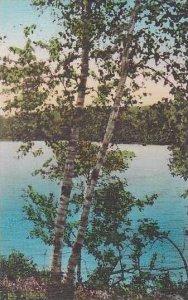 Minnesota Itasca State Park Woodland Scene Albertype