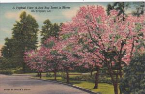 Louisiana Shreveport Typical View Of Red Bud Trees In Bloom Curteich