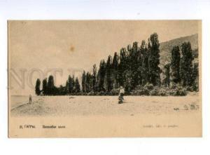 137936 Caucasus Abkhazia GAGRA Populus alley Gagry Vintage PC