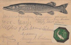 Fish ; HECHT , Esox lucius , 1914