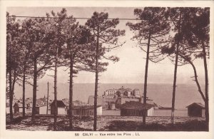 CALVI, France , 00-10s : Vue entre les Pins