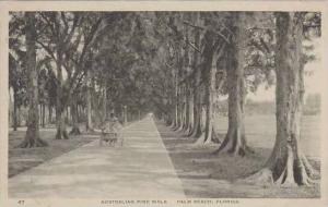 Florida Palm Beach Australian Pine Walk