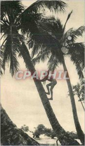 Postcard Modern New Caledonia (Coconut) In the wake of Bougainville