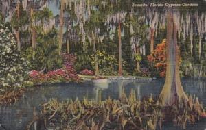 Cypress Trees In Beautiful Cypress Gardens Florida 1954 Curteich