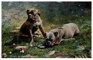Dog ,  Bull dogs