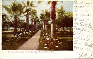 California Long Beach Palms and Lilies In The Park 1906