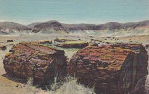 Agatized Logs, Petrified Forest, Arizona, 1930-1940s