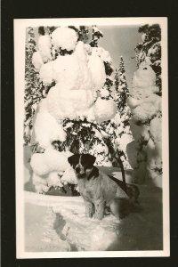 Vintage Saint Bernard Dog in Winter Made in Canada Real Photo Postcard