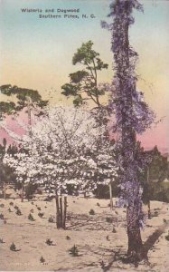 North Carolina Southern Pines Wisteria And Dogwood Albertype