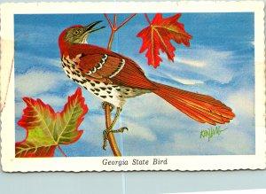 Georgia State Bird Brown Thrasher Postcard unused (20396)