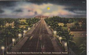 Florida Hollywood Royal Palm Lined Hollywood Boulevard By Moonlight