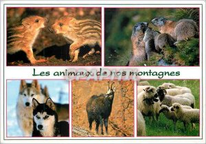 Modern Postcard The animals of our mountains Marcassins Marottes Huskys Chamo...