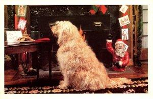 Humour Dog Looking At Santa's Cookies The North Shore Animal League