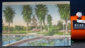 STD Vintage A Tropical Park Scene in Southern California Unposted Linen