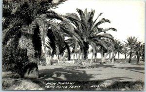 Alice, Texas RPPC Real Photo Postcard PALM SHADOWS Street View Trees c1940s