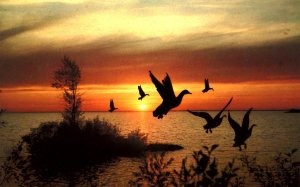Canada - ON, Geese at Sunset