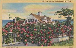 Massachusetts Cape Cod Rose Blossom Time On Cape Cod