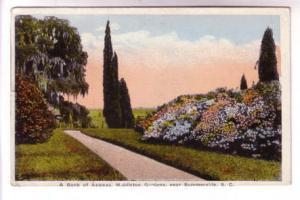 Azaleas Middleton Gardens Summerville South Carolina, Asheville Post Card CDS...