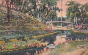 Florida Palatka Ravine Gardens