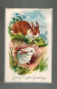 1910 Madison Square Garden NY USA postcard Cover Easter Bunny Rabbits in Hole