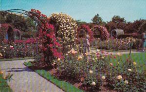 Roses In Bloom Beautiful Garden Scene In South Georgia