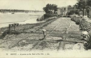 egypt, CAIRO, A Garden on the Bank of the Nile (1910s) LL. 71