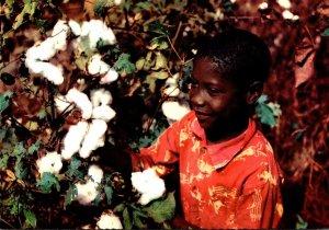 Mississippi Black Americana Picking Cotton