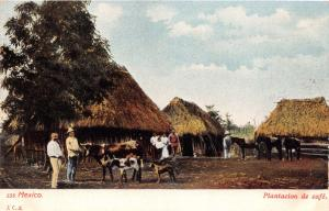 MEXICO PLANTACION de CAFÉ~COFFEE PLANTATION~JCS #535 POSTCARD 1900s
