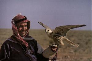 bahrain, Native Falconer with Falcon (1970s) Postcard