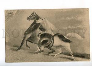 240215 HORSE Lovers in Storm Mustang Vintage postcard