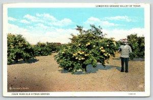 Lower Rio Grande Valley Texas~4 Yr Citrus Groves~Farmer by Grapefruit Tree~1932