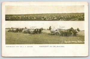 Woodward OK Cancel~Harvest~Farmers Horse Threshing~Look Land Agent~JA Shuck 1908