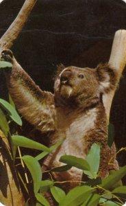 Australia , Koala Bear , 1962