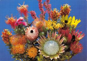 Postcard Spring's Tribute, South Africa, Pincushion Flowers #904