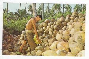 Native man husking coconuts, Singapore 50-60s