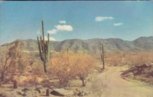 Cactus Desert Roadway Winding Through Cactus and Sagebrush