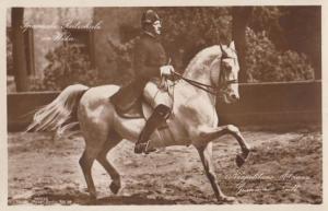 Wien Horse Rider German Mounted Equestrian Antique Postcard