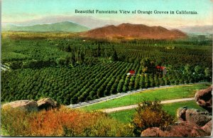Vtg Postcard 1900s Beautiful Panorama View of Orange Groves in California Unused