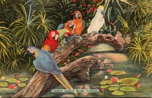 Florida Miami Beautiful Parrots At Parrot Jungle